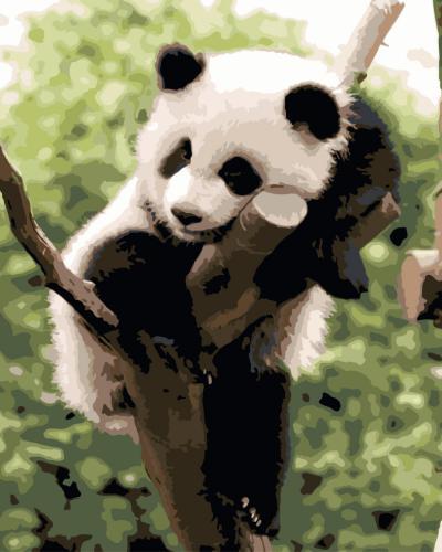 """Фото Картина по номерам """"Панда"""""""