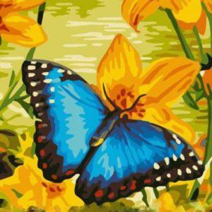 "Фото Живопись по номерам ""Синяя бабочка"""