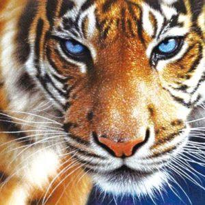 """Фото Живопись по номерам """"Тигр"""""""