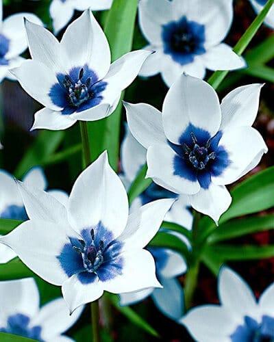"Фото Картина по номерам ""Белые цветы"""